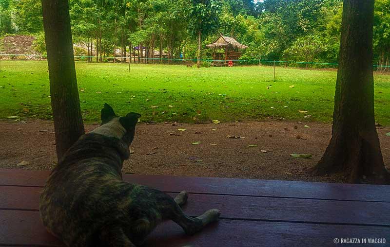 recensione baanrai-saiyoknoi-resort