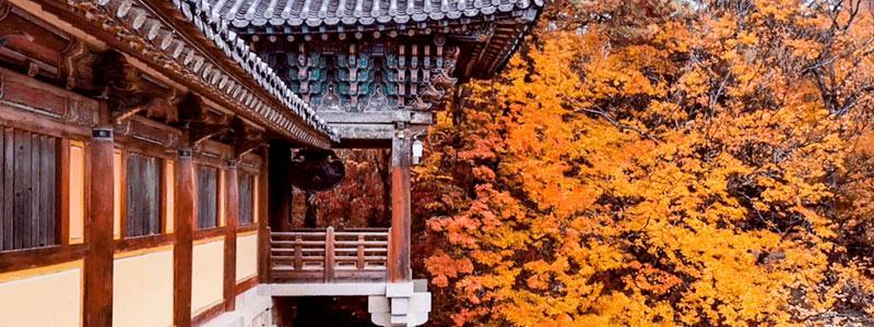 Itinerario Corea del Sud 15 giorni [AUTUNNO]